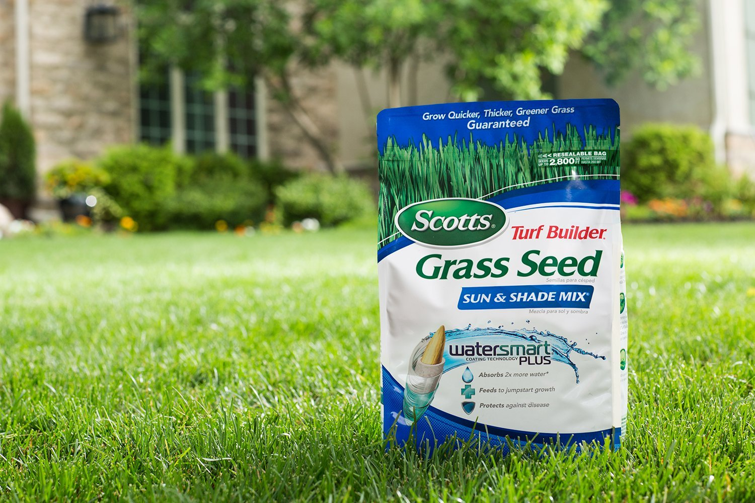 Gr Seed For Shade Area Mycoffeepot Org