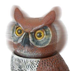 owl-scarecrow1